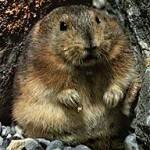 Content Marketing: Don't Be a Lemming